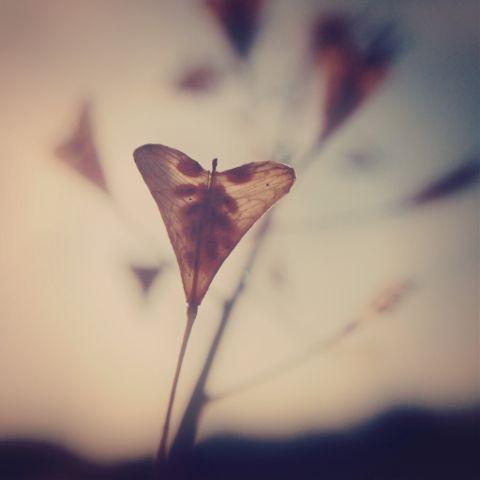 #ibelieveinwords,#poetry,#love,#iphone,#photojojomacro