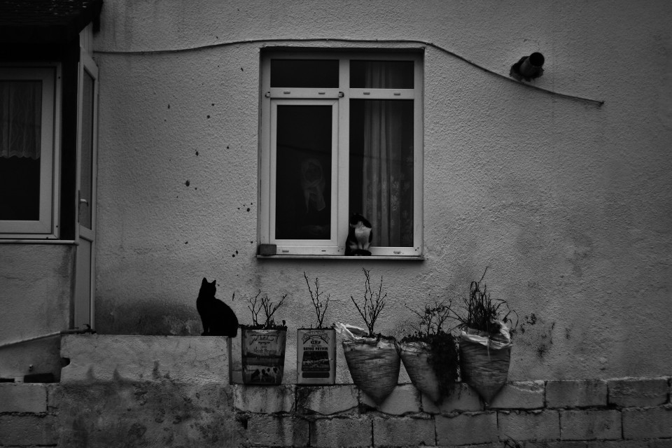 The cat lady. I tried to show off my skills in this photo Because there's NO effect other than b&w here. Can you see her through the window? #photography #blackandwhite #vintage #petsandanimals #people #spring  Week in review 17.03.2015 yay!