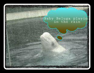 raindrops weeklytag picsart beluga