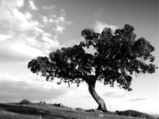 trees blackandwhite nature photography