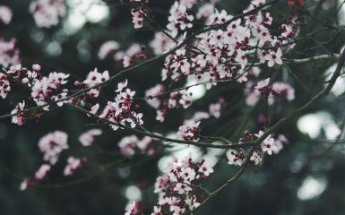 emotions flower nature spring