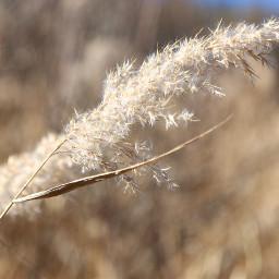 freetoedit nature plant