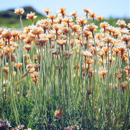 tiny flowers travel england lands