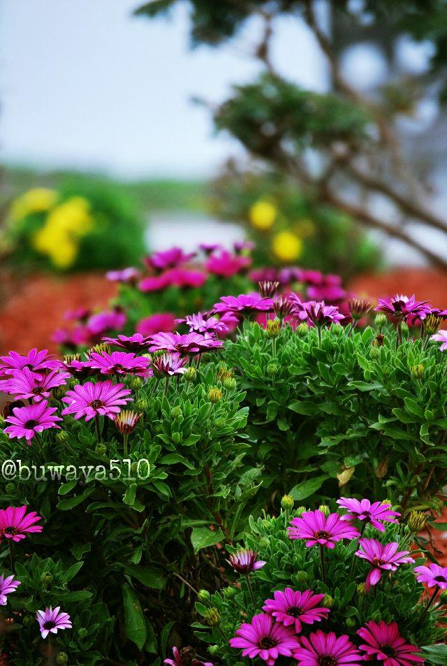 #garden