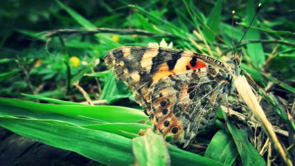 taken macro insects insect butterfly
