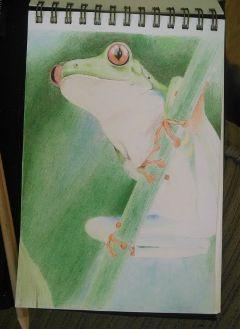 drawing pencilart petsandanimals nature frog