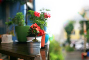 rain colorful flower summerstory travel