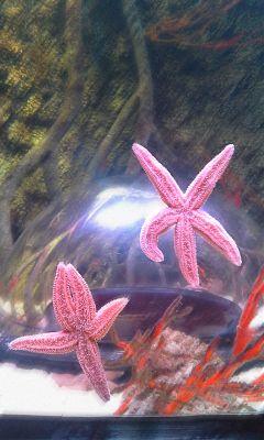 wapmotionblur sealife aquarium istanbul