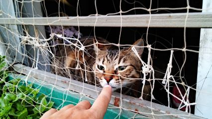 petsandanimals israel tlv cat