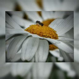 hdr photography petsandanimals flower nature