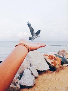 sky freetoedit photography beach bird