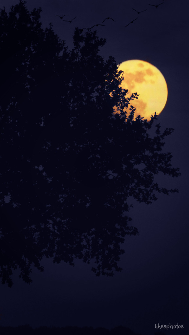 A dreamer is one who can only find his way by moonlight, and his punishment is that he sees the dawn before the rest of the world. Oscar Wilde  #emotion #quotes #moon #night #tree #birds #love