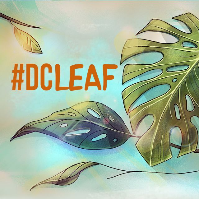 leaf drawing drawing contest