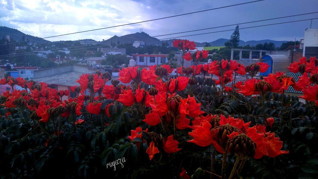 Oaxaca-Mexico mi casa