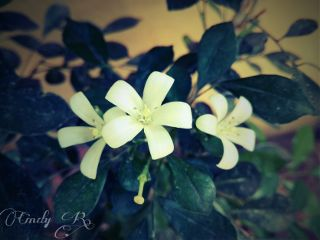 flower nature white photography cute