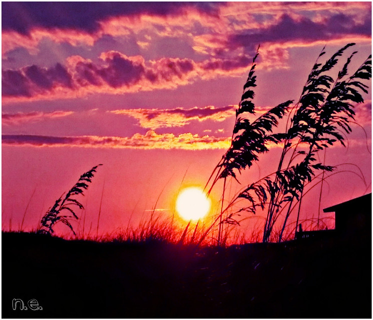 Hello Picsart friends :-)  Hope you are having a wonderful night.  #seaoats at #sunset #ocean #beach #nature #colorful