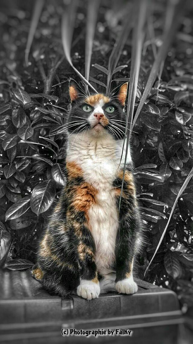 My Cat 😎 Morty #blackandwhite #colorsplash #photography #animals  #emotions