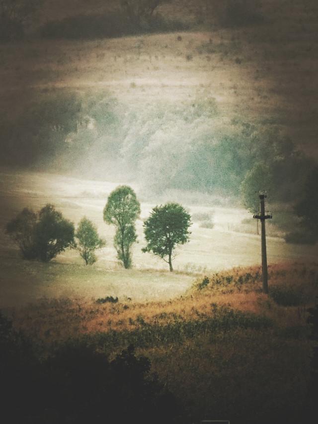 #fog  #morning #vision