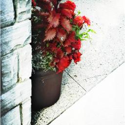 flowers picsart red summer