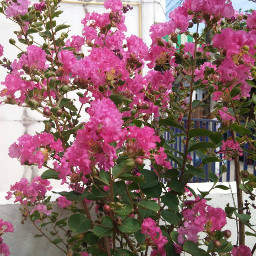 flower beutyful