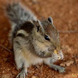 nature photography petsandanimals squirrel colorful