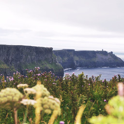 cliffsofmoher dublin flowers rocks beutiful