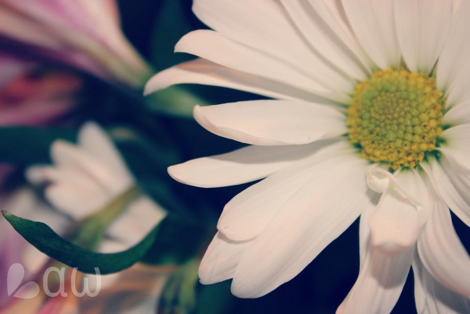 ↝ Oηε ∂αγ iτ ωi∫∫ α∫∫ ⅿακε δεηδε.  #nature #flower #photography #spring #quotesandsayings