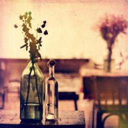 flowers bottle stilllife 50mm