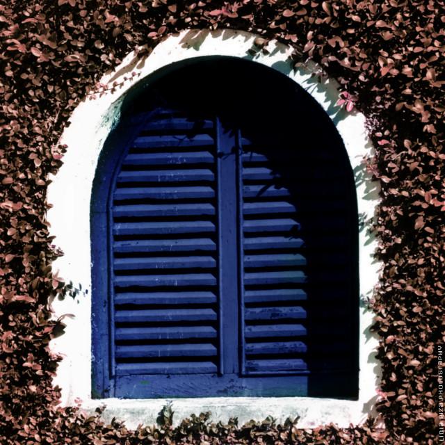 #blue #photography #window #colorcombo