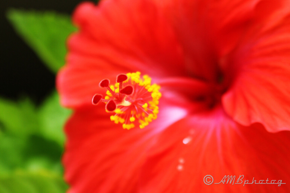 Pretty in red  #red  #flower  #macro  #macrophotography  #nature