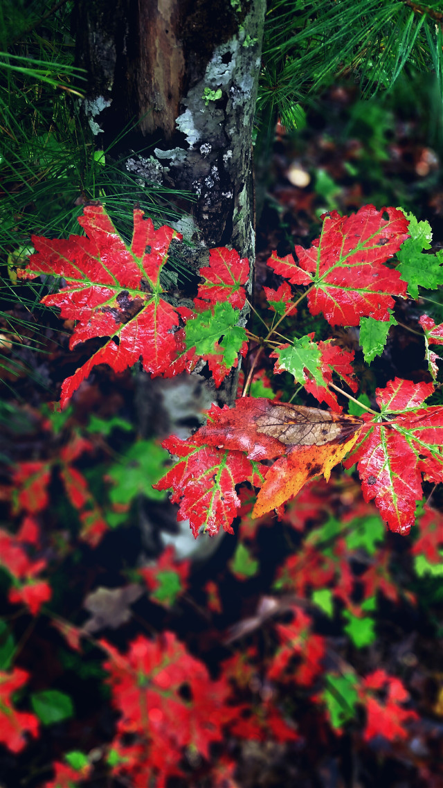 Autumn is here #nature  #colorful
