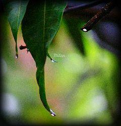 nature leaf drops droplets vignette