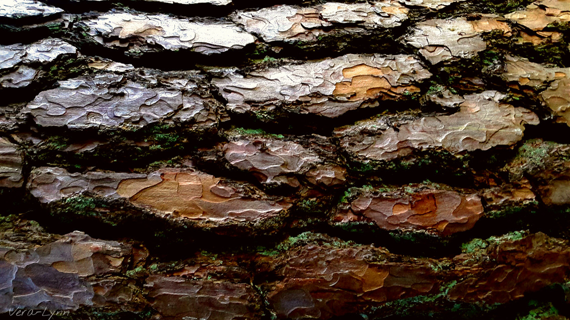 #nature  #outdoors #photography #close-up #color  #texture  #tree #bark #brown  #sidelight  #highlights