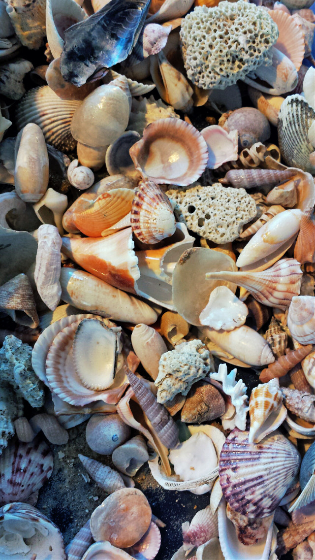 """Bucket of shells"" A collection of shells used to decorate a wedding reception this weekend. #nature never ceases to amaze me. #freetoedit for those texture lovers! :) enjoy"